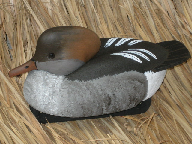Hooded Merganser Hen